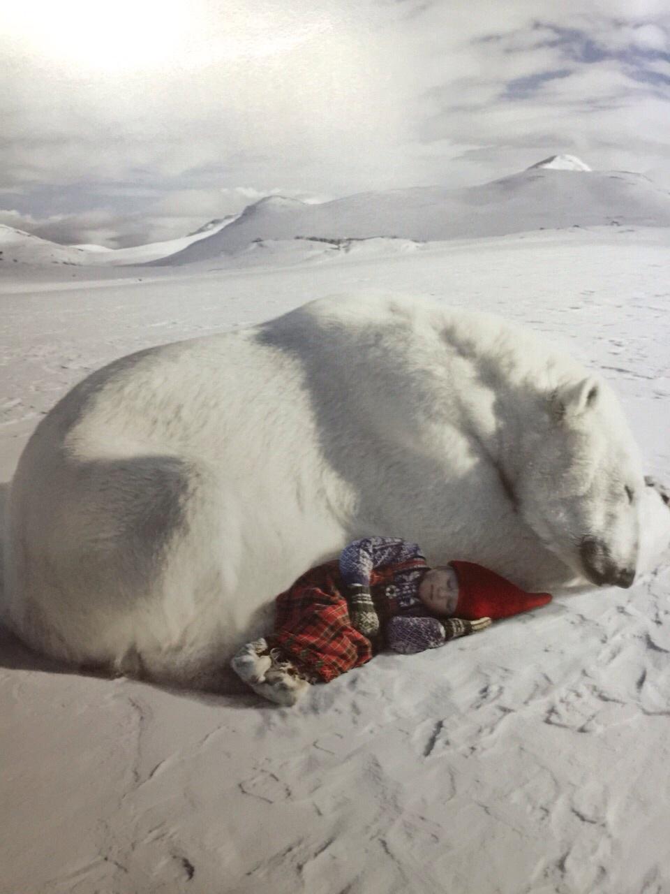 是跟真的北极熊,鹿,在雪地里拍摄的