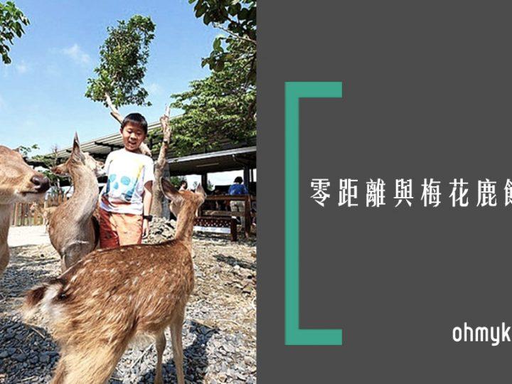 【屏東親子景點】墾丁小奈良超萌小鹿餵食互動體驗